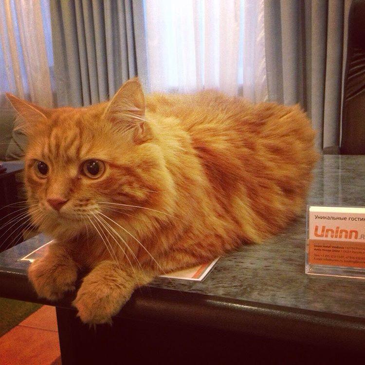 """Кот Джус в отеле """"Uninn"""""""